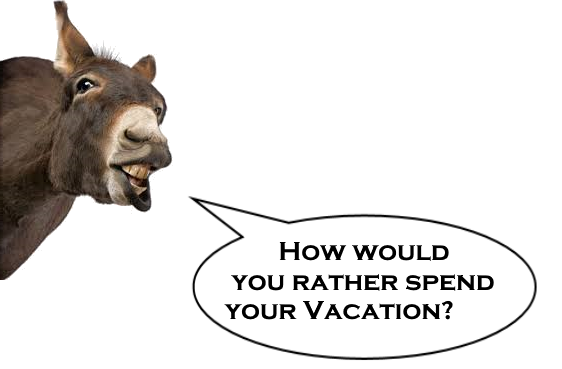 How would you rather spend your vacation?